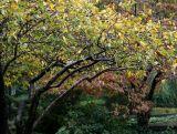 Crab Apple & Dogwood Trees