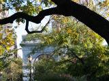Golden Rain Tree & Arch