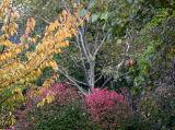 Fall 2006 - Washington Square Park