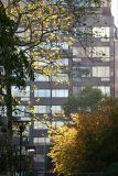 Sycamore & Hawthorne Tree Foliage