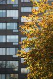 Hawthorne Tree Foliage