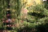 Willow, Pine, Yellow Maple & Dogwood