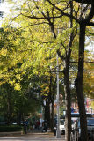 Locust Trees & Downtown View