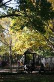 Children's Playground & Yellow Oak Foliage