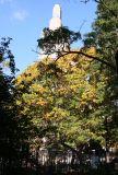 Oak Tree Foliage & One Fifth Avenue Summit