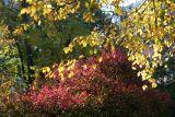 Burning Bush & Elm Tree Foliage