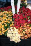 Birch & Chrysanthemums