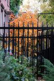 Foliage & Street Gardens