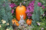 Rabbit, Pumpkins & Chrysanthemum Garden