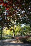 Park View - Elm Tree