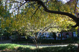 Cherry & Hawthorne Tree Foliage