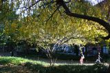 Park View - Cherry & Hawthorne Tree Foliage