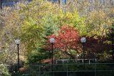Garden View - Dogwood, Pine, Mulberry, etc.
