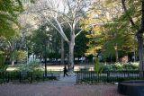 Sycamore Tree & Washington Square East View