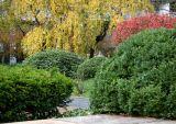 Cherry,  Rhododendron, Burning Bush, Boxwood, Juniper, etc.