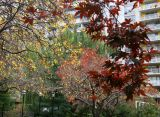 Crab Apple, Red Dwarf Maple, Dogwood & Willow