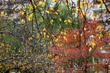 Crab Apple, Dogwood, & Willow Foliage