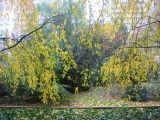 Cherry Tree Foliage & Garden View