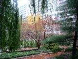 Dogwood, Willow & Pine Trees