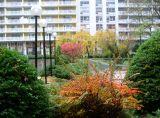 Berberis & Garden View