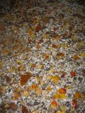Mostly Hawthorne Foliage on a Pebble Bed