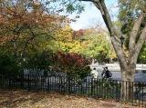Park View - Burning Bush Foliage