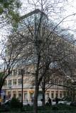 Apple Tree & NYU Student Center