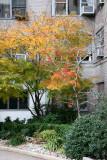 2 Fifth Avenue Garden
