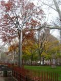 Park View - Oak & Norway Maple Foliage