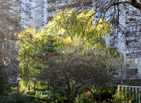 Garden View - Dogwood, Willow & Crab Apple Trees