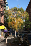Northend View - Birch & Scholar Tree