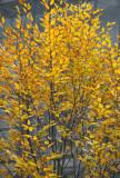 Unknown Tree Foliage