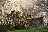 Garden View - Hydranga Bush & Utility Shed