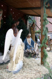 Nativity Scene at St Anthony's Church