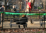 Small Dog Run with Holiday Decorations