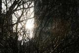 Sunrise Vortex through a Bridal Veil Bush