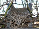 Nest Construction