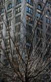 Cherry Tree & NYU Business School