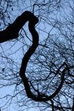 Scholar Tree Branch