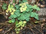 Miscellaneous Ground Foliage