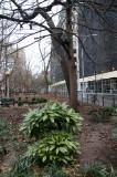 Washington Square East - Gold Dust Plants