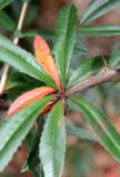 Unknown Foliage