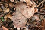Loose Ground Foliage