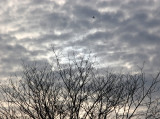 Sun Over Cherry Tree, Bird Over Sun, All in Clouds