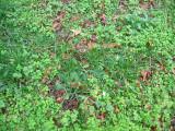 Grass & Ground Foliage