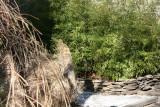 Pampas & Bamboo Garden at 2 Fifth Avenus