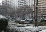 Winter 2006 - Washington Square Village Gardens