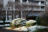 First Snow of the Season on Boxwood, Rhododendron & Cherry Trees
