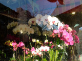 Orchids at the 6th Avenue Florist Window