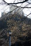 NYU Education Building & Scholar Tree Seed Pods